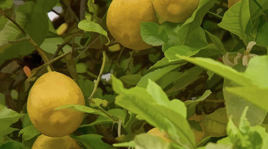 LemonImage